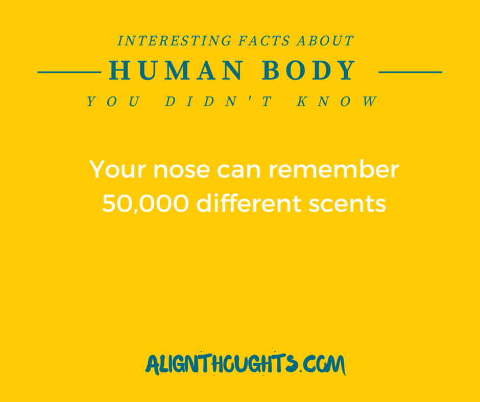 AlignThoughts-Interesting-Facts-About-Human-Body (11)