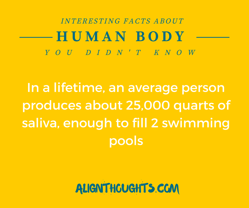 AlignThoughts-Interesting-Facts-About-Human-Body (12)