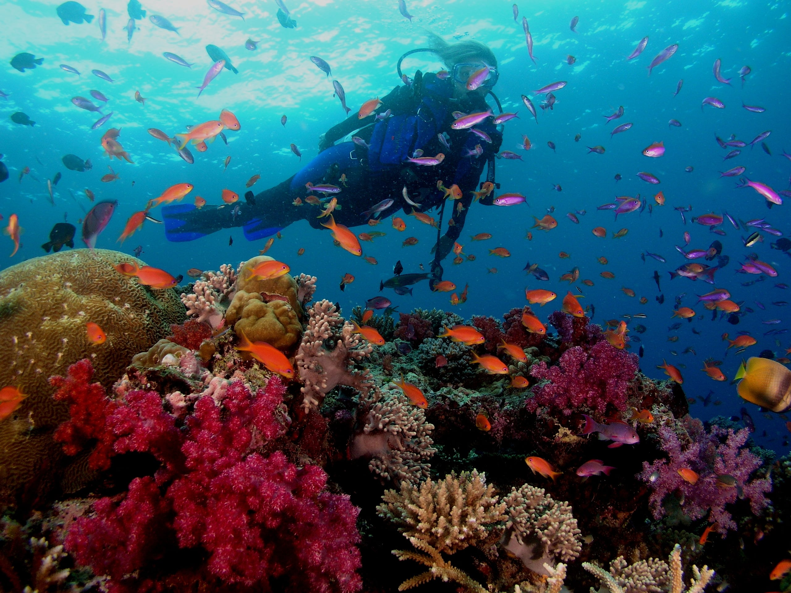 alignthoughts-scubadiving-jobs-in-the-world-you-must-try