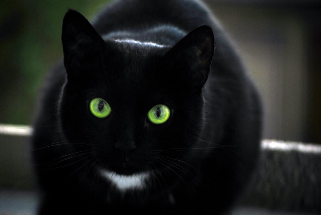 Black-Cat-alignthoughts