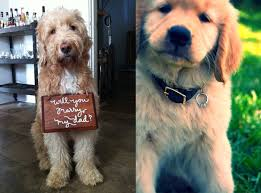 alignthoughts-dog-proposal-ideas-for-engagement