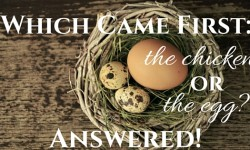 Which came first – The Egg or Chicken? True Answer Is Here