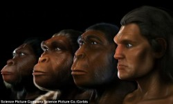Here Is The Chronicle Of Human Evolution And It's Absolutely Spellbound