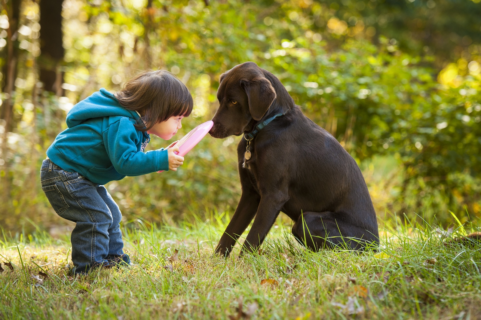 alignthoughts - Young child playing fetch with dog