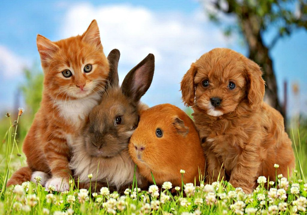 Adorable puppies and kittens and bunnies together together with cats little friends friend dog sweet cute animal bunny orange