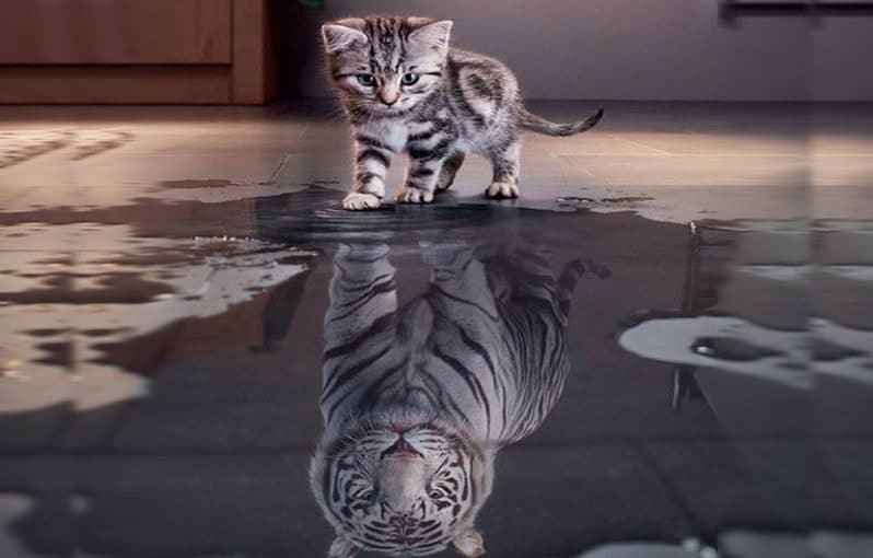 alignthoughts-believe-in-yourself-cat-siberian-tiger