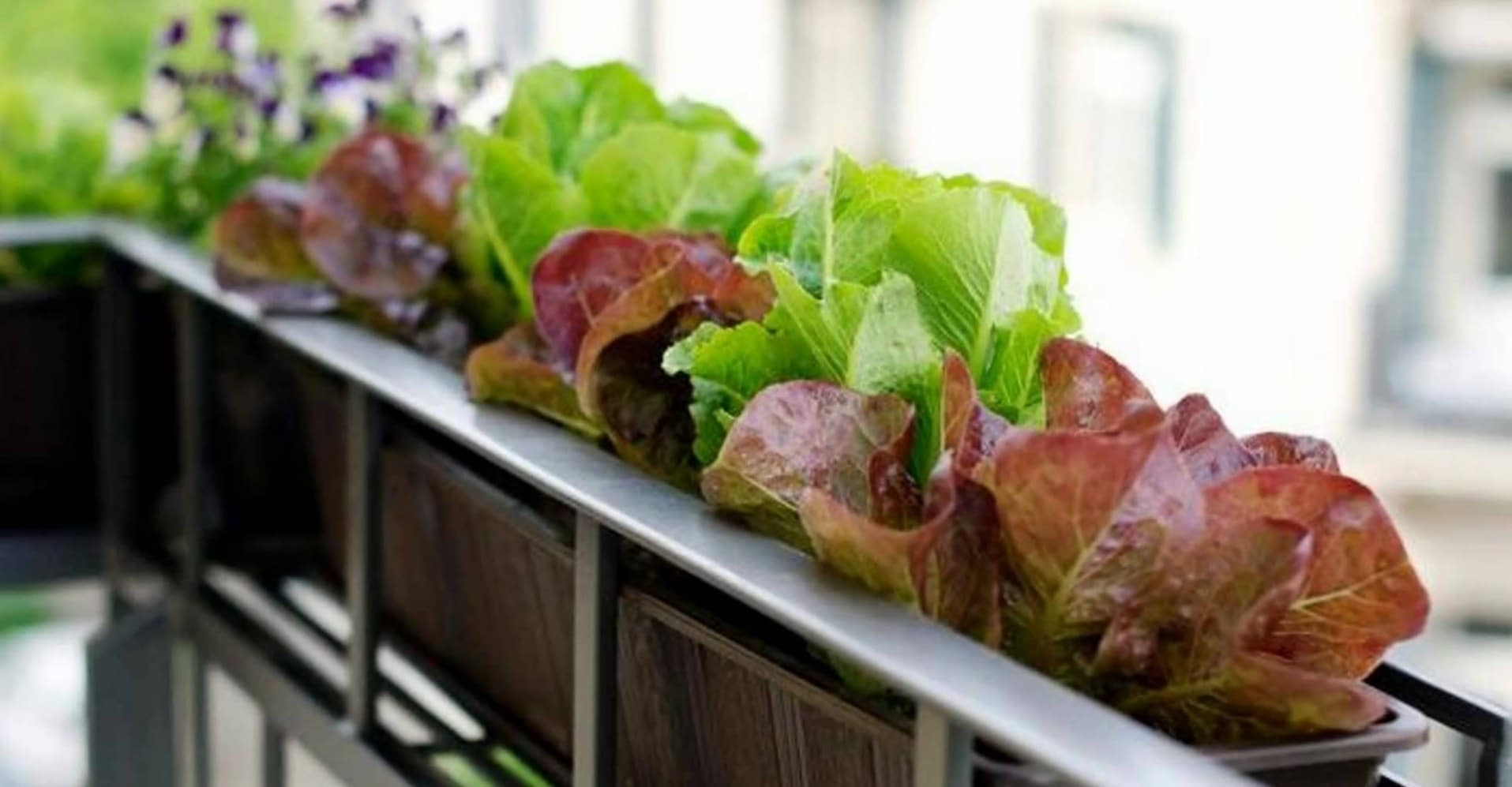 apartment-kitchen-garden-DIY-you must try