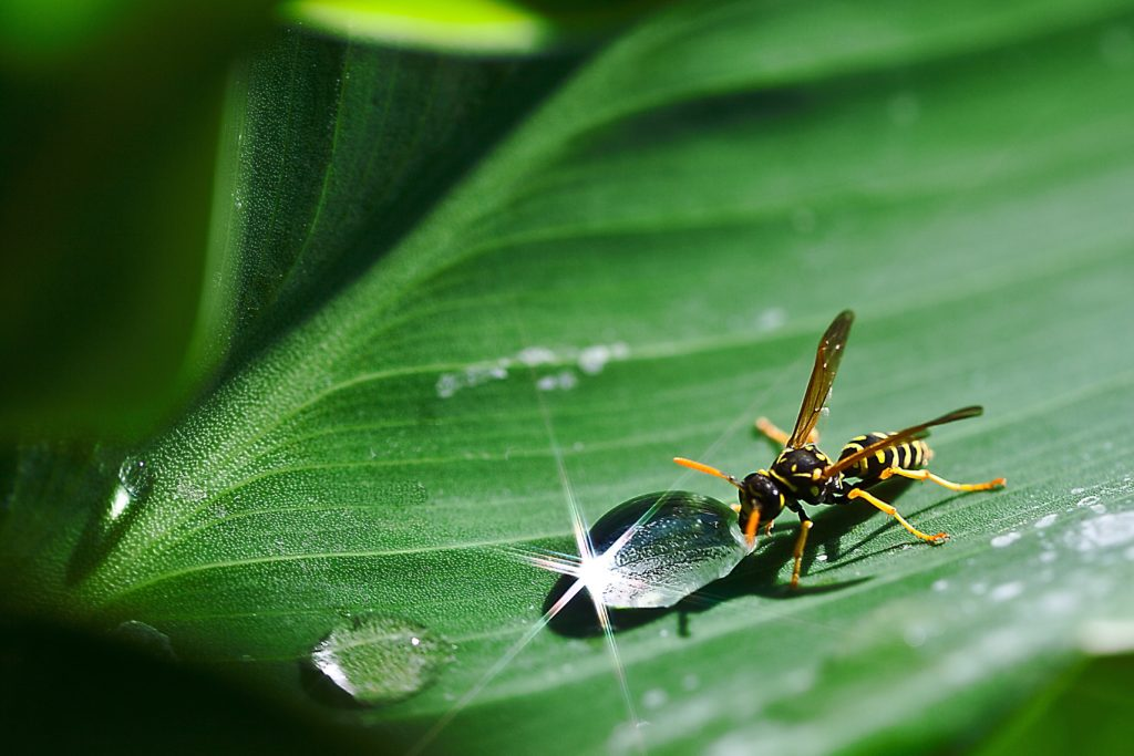 small-action-count-alignthougths-drop-of-water-osa-water-leaf