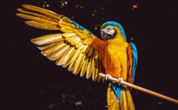 intelligent birds-macaw