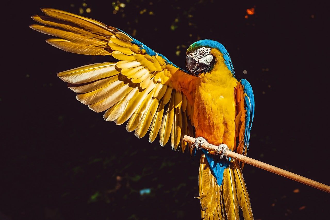 intelligent birds-macaw-and-african grey parrot