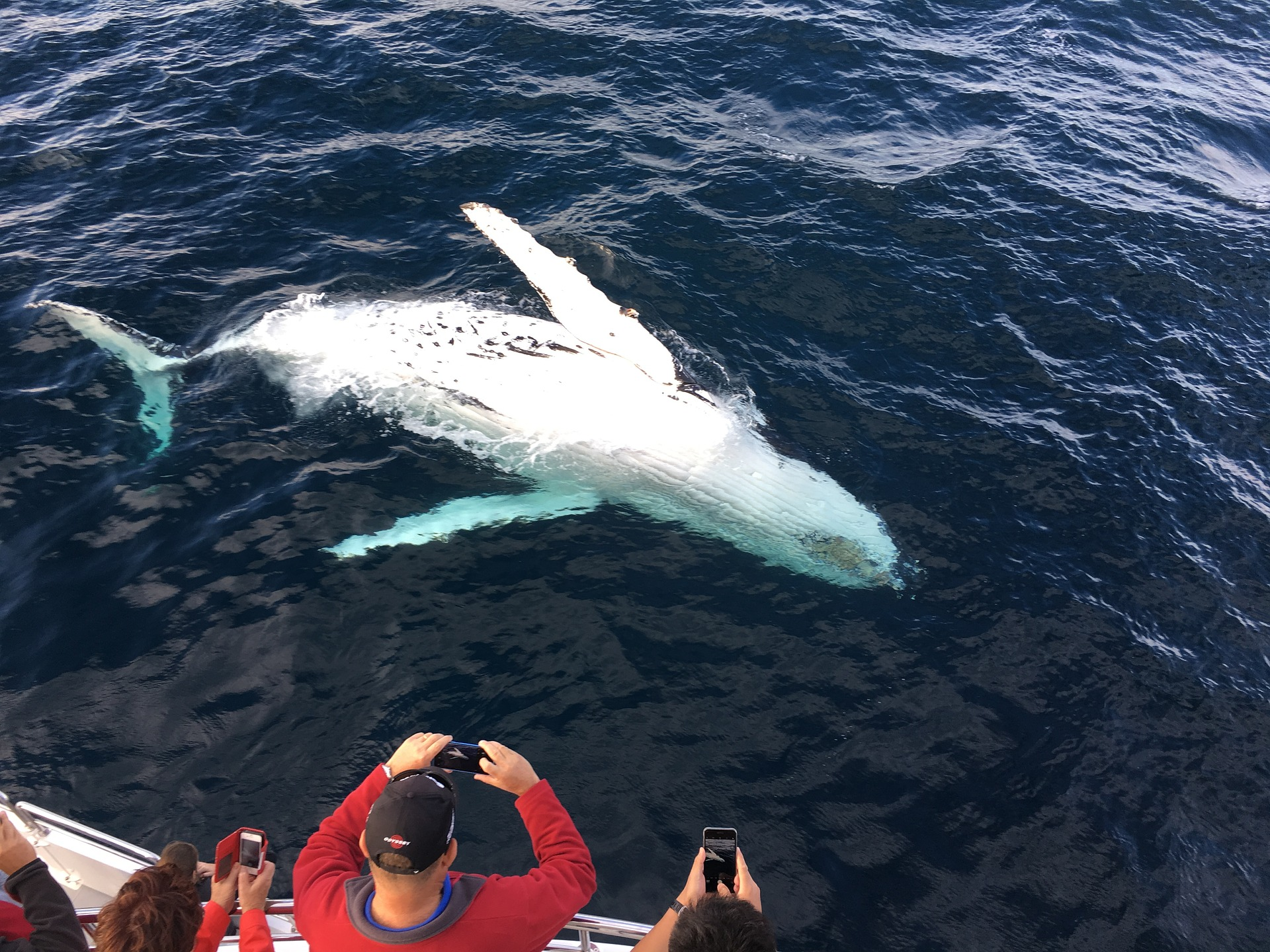 whale-watching-gold-coast