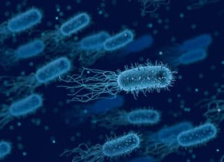 how can bacteria produce electricity-alignthoughts