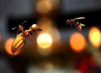How Smart Are Honey Bees