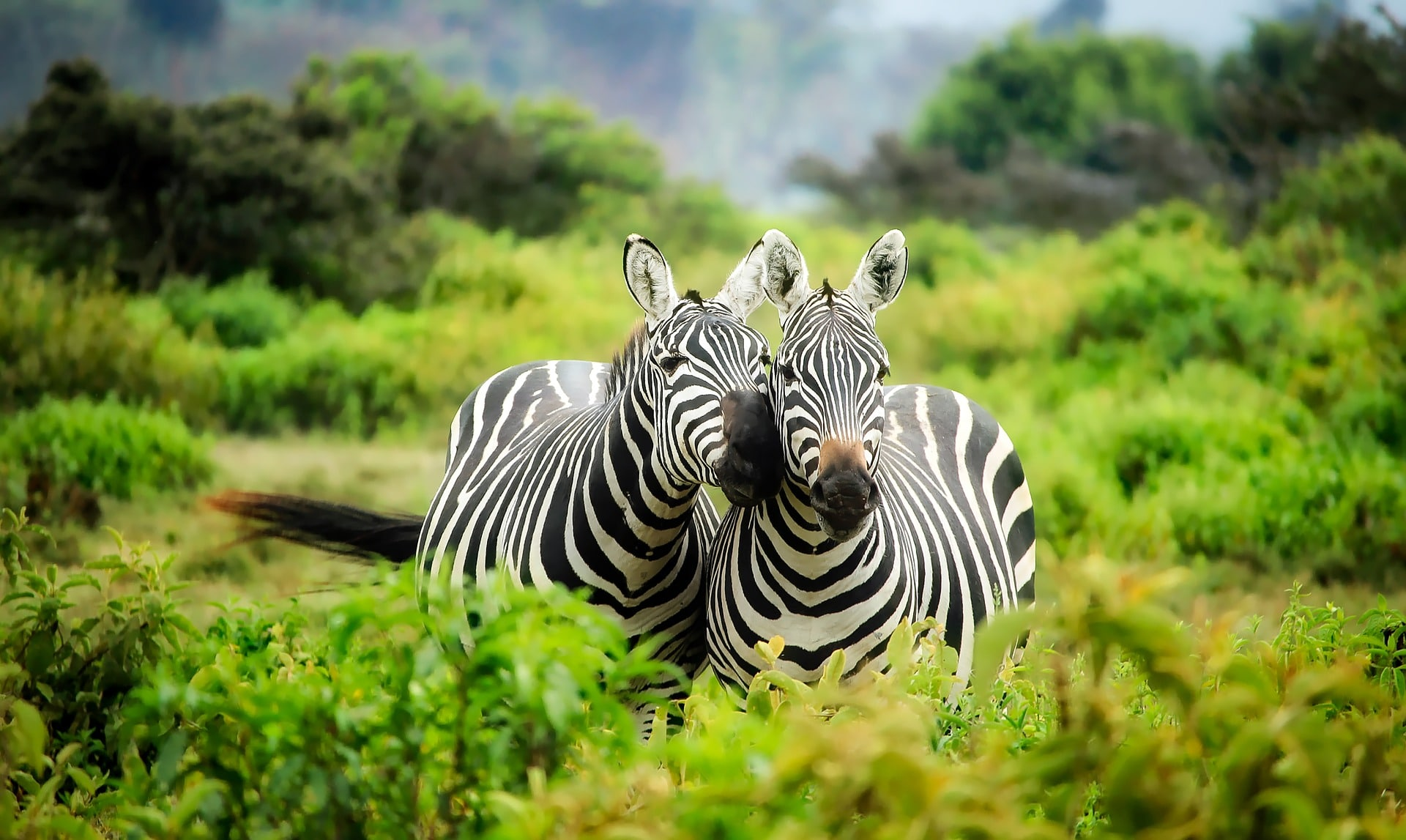 solo-holiday-ideas-africa-alignthoughts