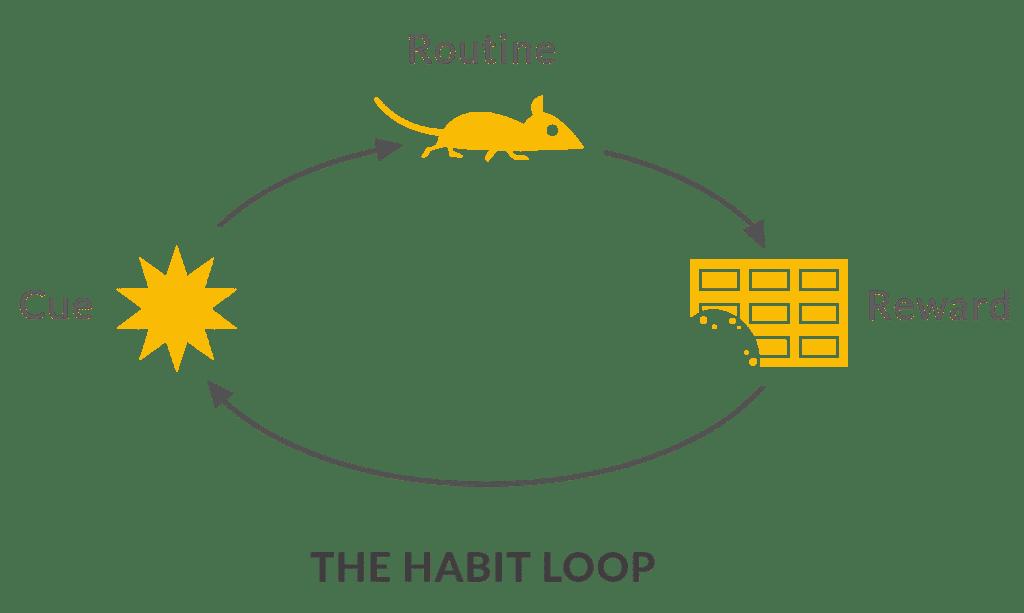 habit loop-forming habits-habit building