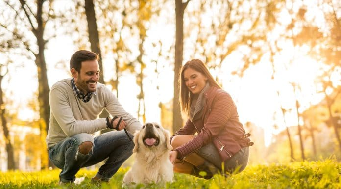 how-pets-dogs-can-help-mental-health-alignthoughts